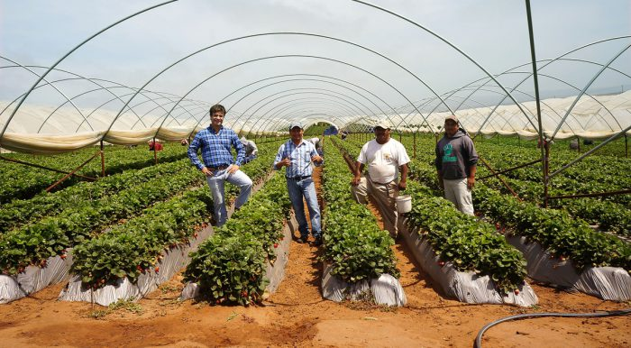 Driscoll's berry growers